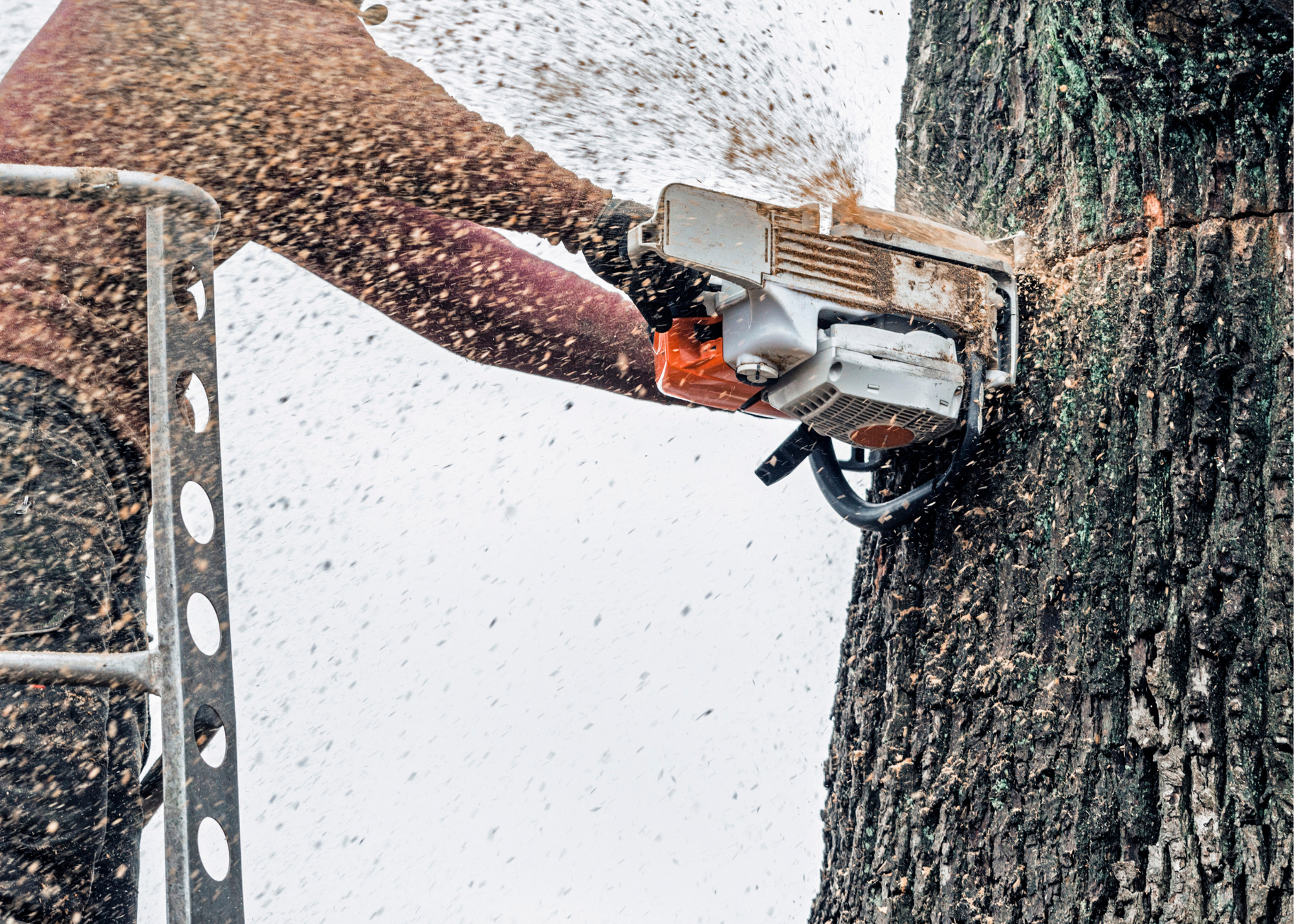 tree trimmers Miami
